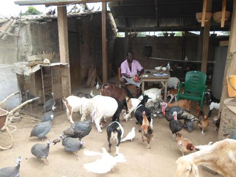 vétérinaire fermier 3
