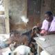 """Article : Entretien avec un fermier atypique: """"La Maison du paysan travaille à restaurer l'économie villageoise …"""""""