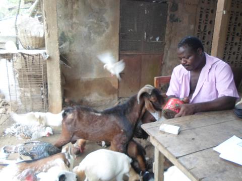 Le vétérinaire fermier