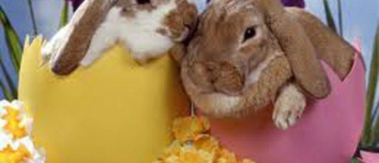 Article : Joyeuses Pâques