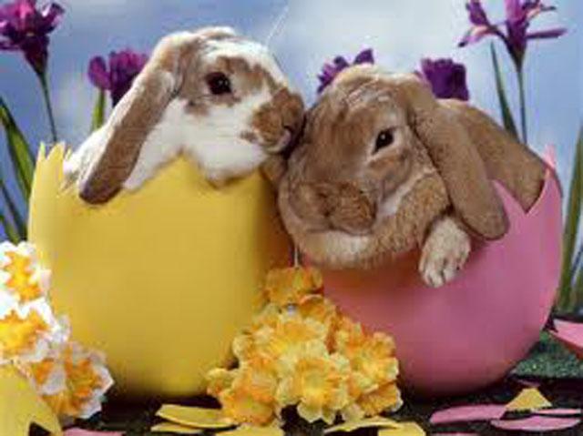 Des lapins de Pâques