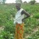 Article : BENIN/ AGRICULTURE/MARAÎCHAGE A GRAND-POPO  Des milliers de familles en vivent